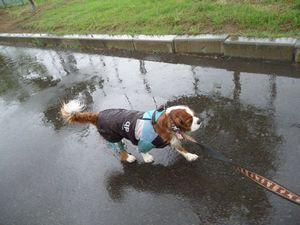 P1000178雨