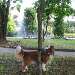 P1000447公園消毒