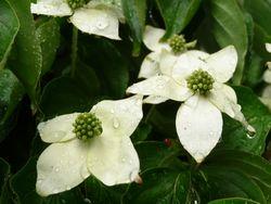 P1000511白花