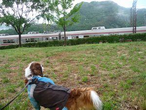 P1000514電車