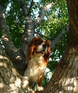 P1000599銀杏の木