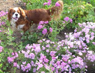 P1000957紫花