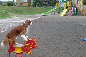 P1010018バラ公園