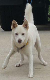 P1010421白犬
