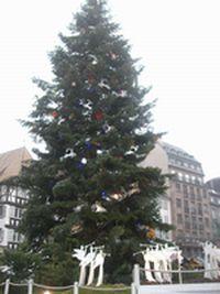 広場のツリー