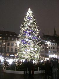 ライトアップされたツリー
