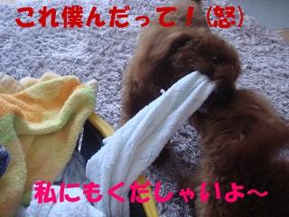 DSC01859s-.jpg