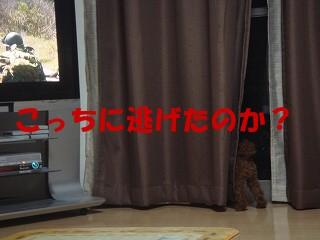 DSC02106s-.jpg