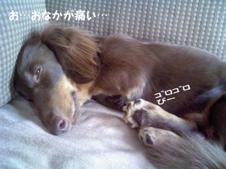 変換 ~ お腹JPG