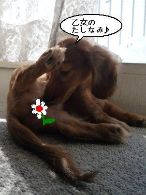 画像 243blog