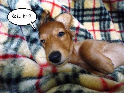 画像 004blog