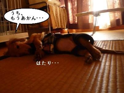 画像 541blog