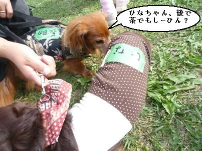 yanyanさん運動会2008秋 300