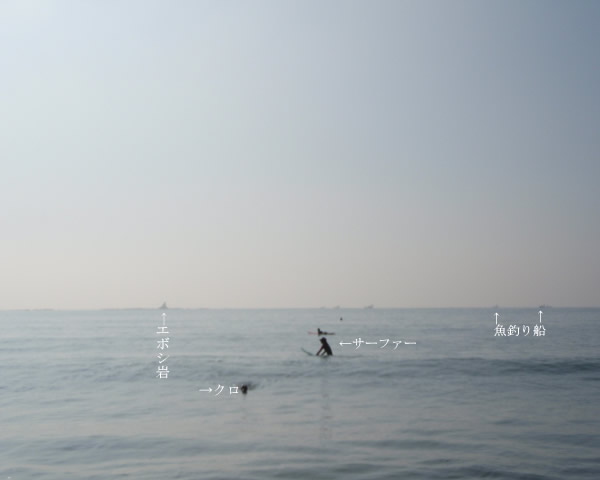 クロの遠泳
