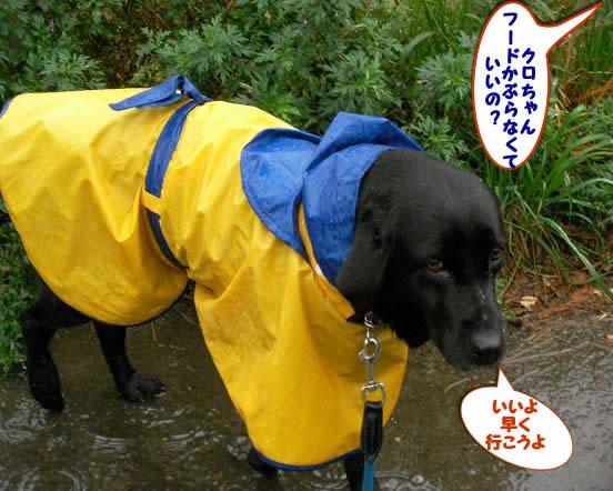 11/10(土)雨:レインコートを着て