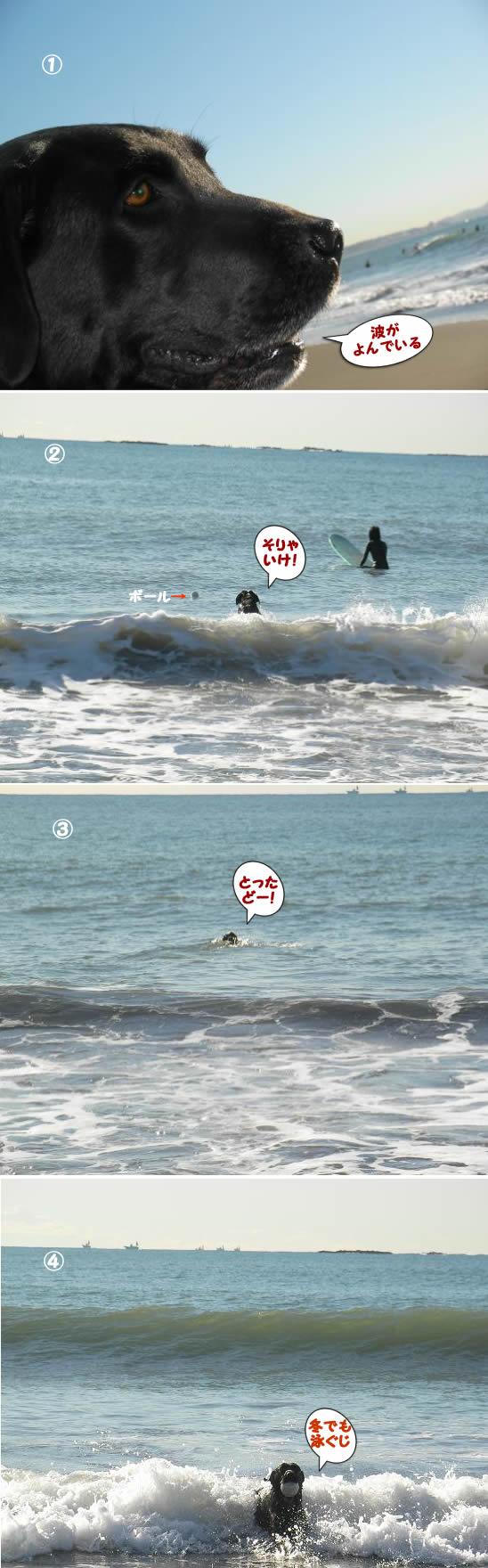 クロいまだ泳ぐ気