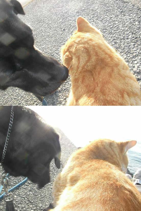 12月21日柳島でクロとネコ