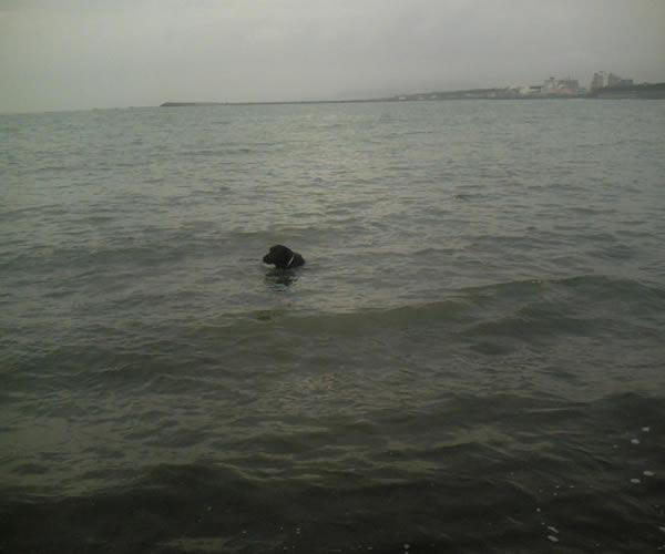 曇天の中での水泳
