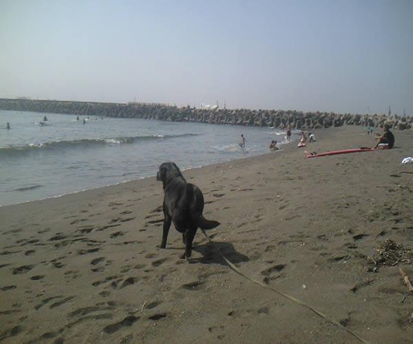 9月22日海水浴日和