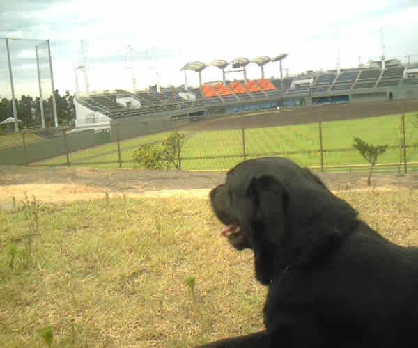 公園の野球場前で