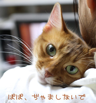 2011_03_29_444.jpg