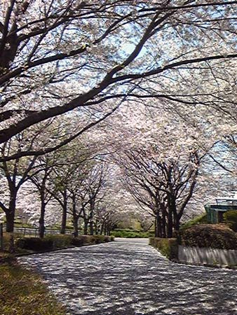 2011_04_15_3.jpg
