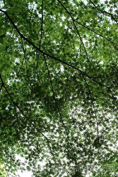 2011_05_06_20.jpg