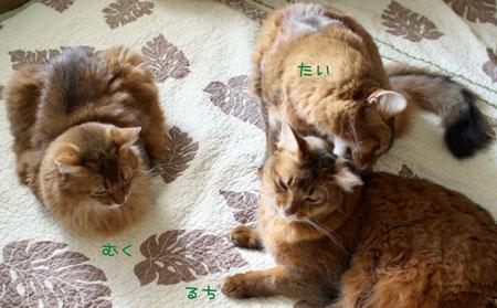 2011_05_31_1.jpg
