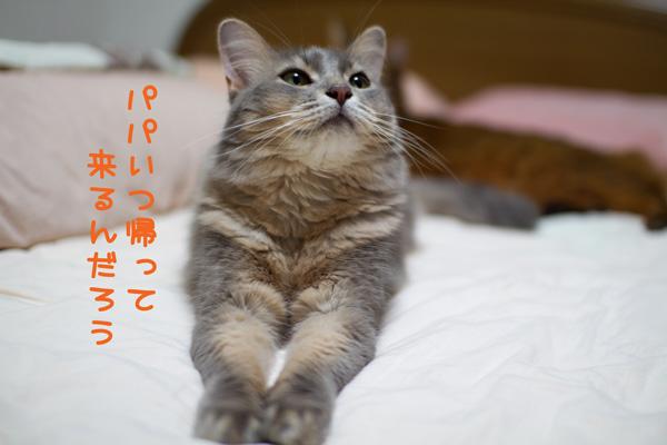 2011_07_28_1.jpg