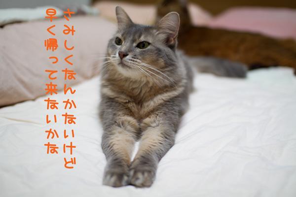 2011_07_28_2.jpg