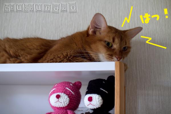 2011_07_29_2.jpg