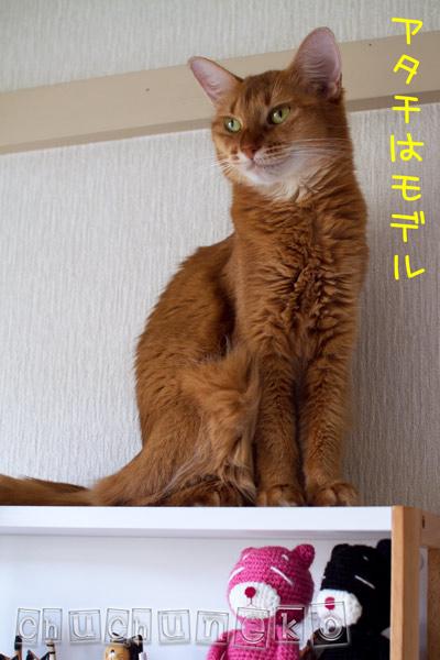 2011_07_29_3.jpg