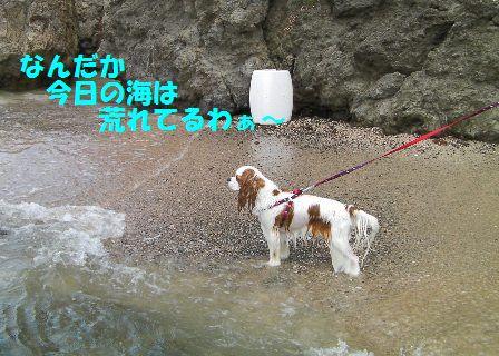 20080803_1.jpg