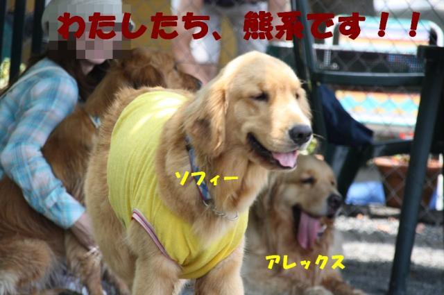 IMG_0436-2.jpg