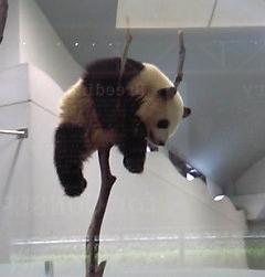 白浜で刺さってたパンダ