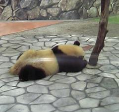 白浜に落ちてたパンダ
