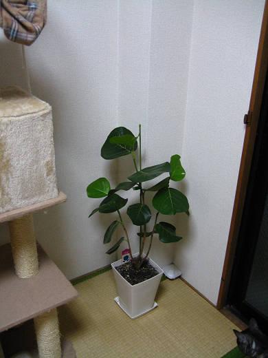 観葉植物で…