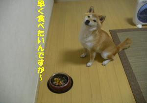 早く食べたい~