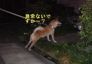 SANY2096_convert_20080831210633.jpg