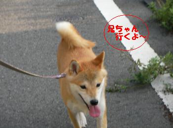 SANY2409_convert_20080907214953.jpg