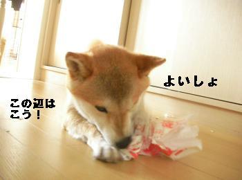SANY4671_convert_20081015204358.jpg