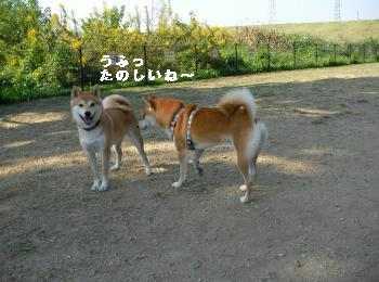 SANY5308_convert_20081020201100.jpg