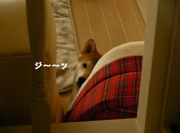 SANY6294_convert_20081118205349.jpg