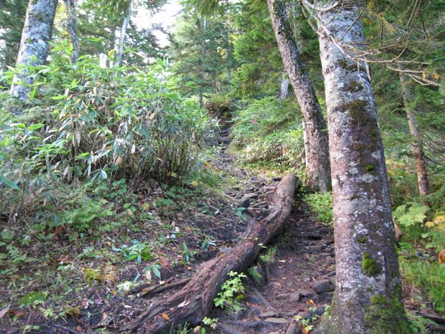 樹林帯続き