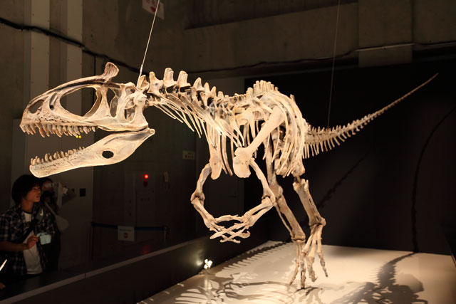 クリオロフォサウルス