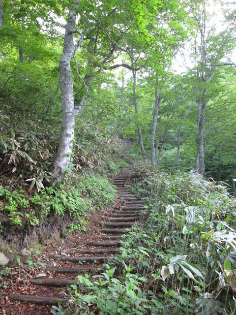 階段とブナ