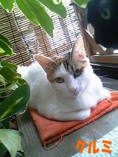 catfriend