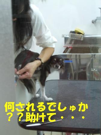 CIMG0064.jpg