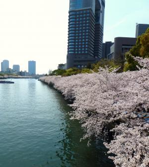 20110420sakura2