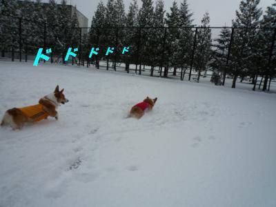 雪遊び10